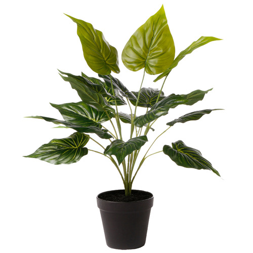 47cm Potted Faux Bely Leaf Plant