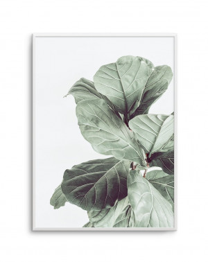 Fiddle Fig No 1 by oliveetoriel.com, a Original Artwork for sale on Style Sourcebook