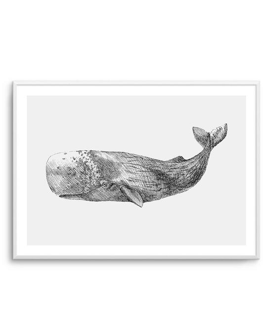 Cachalot Whale | LS