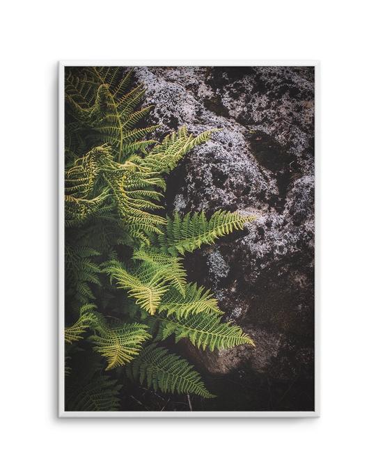 Forest Fern I