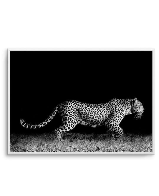 Leopard De Nuit   LS