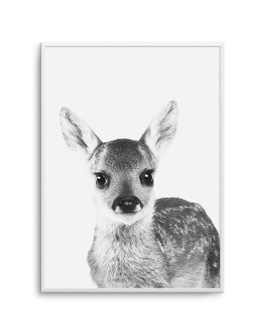 Baby Deer | B&W