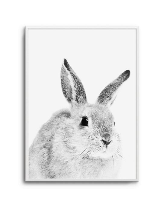 Bunny | B&W
