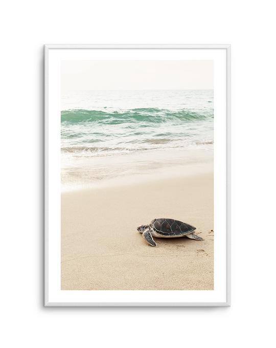 Little Turtle II