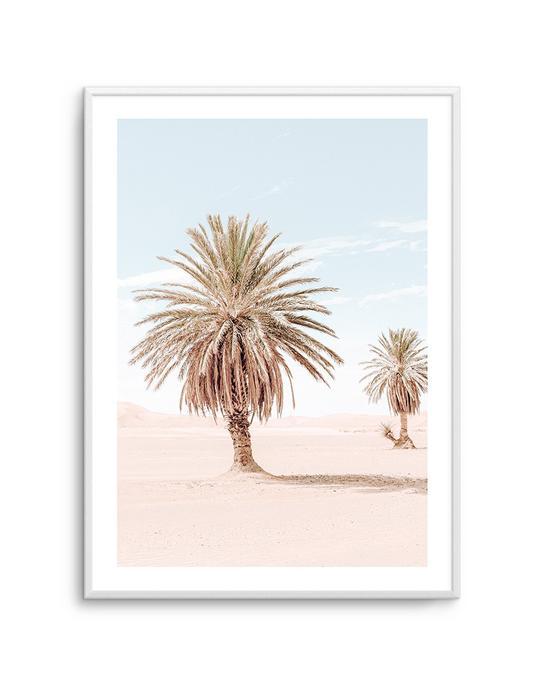 Palms Of Morocco II