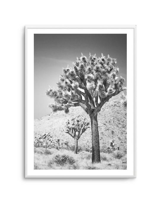 Joshua Tree III   B&W