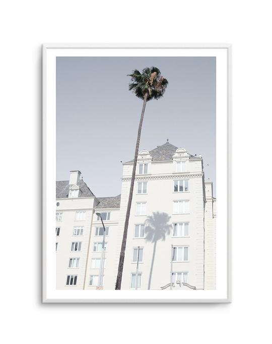 LA City Palm