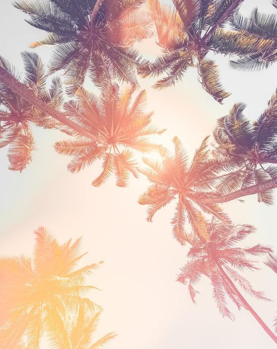 Under the Palms Sunset Wallpaper Mural