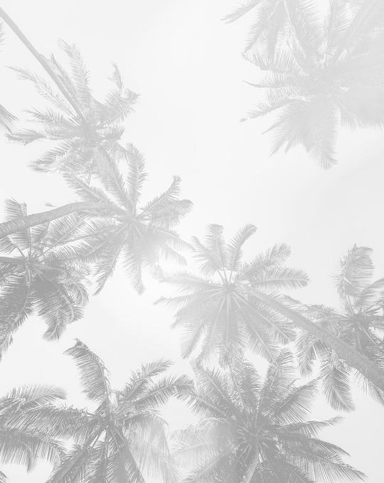 Under the Palms Monochrome Wallpaper Mural