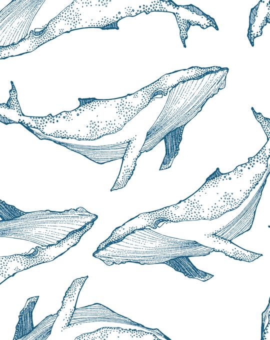 Whale Illustration | Navy on White Wallpaper