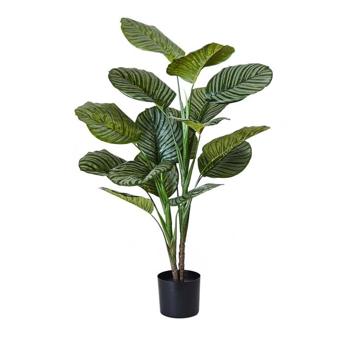 Home Republic Potted Plants   Calathea 120cm - Green By Adairs