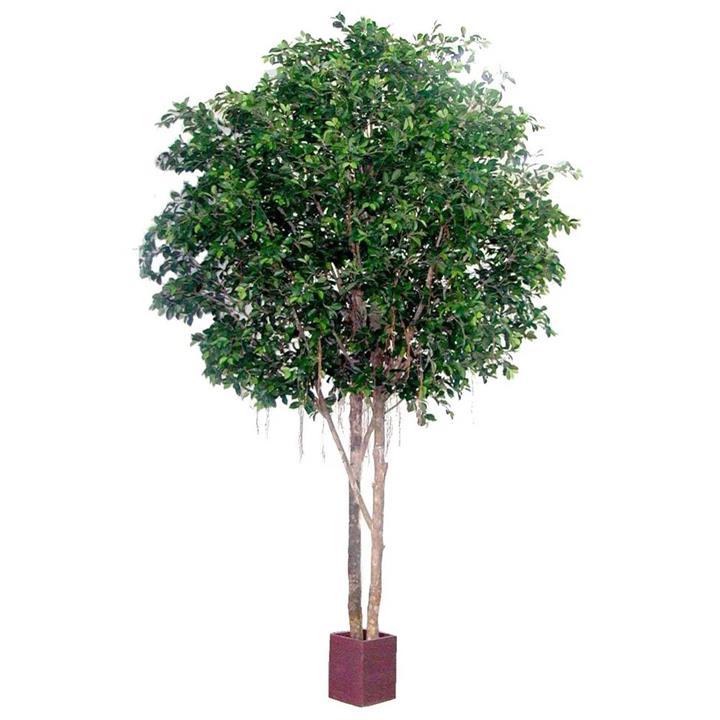 Giant Artificial Ficus Retusa Tree (Round Topiary), 305cm