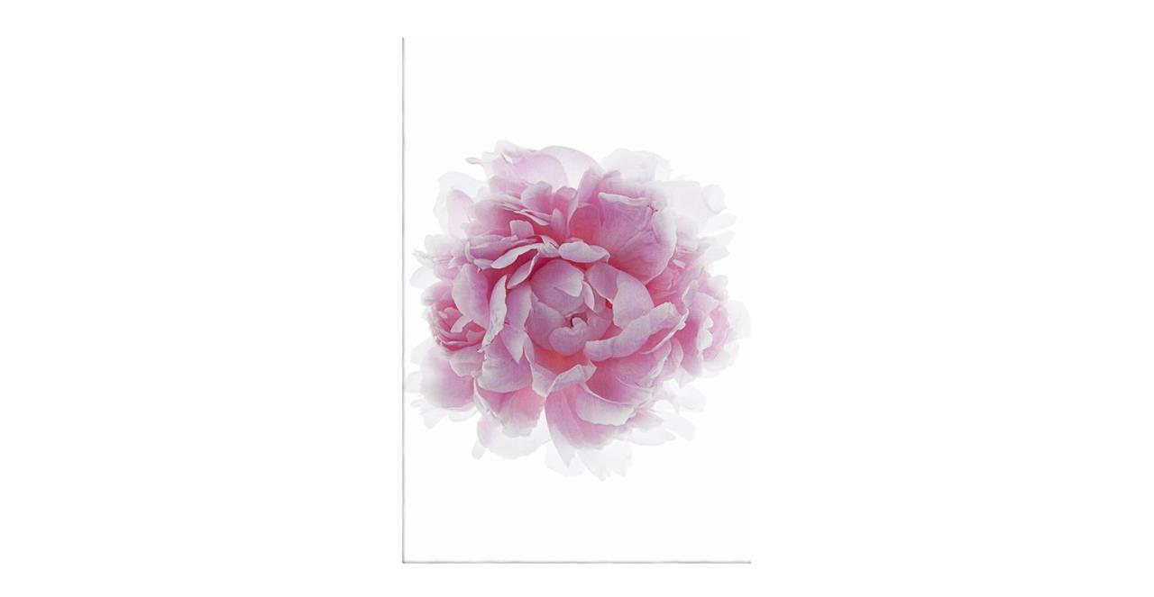 The Blossom Print Canvas Medium Three
