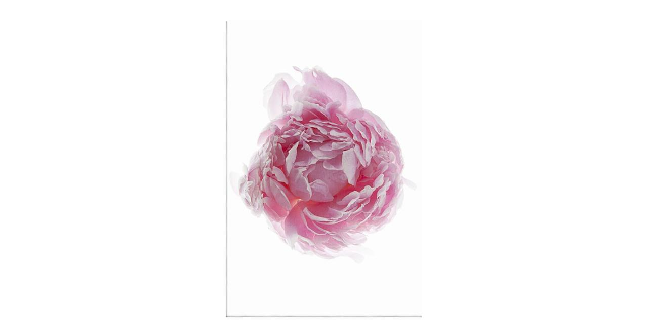 The Blossom Print Canvas Small One