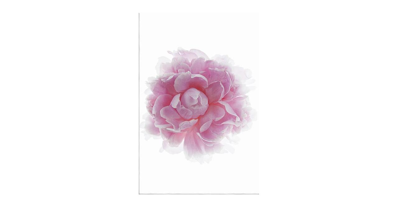 The Blossom Print Canvas Medium Two