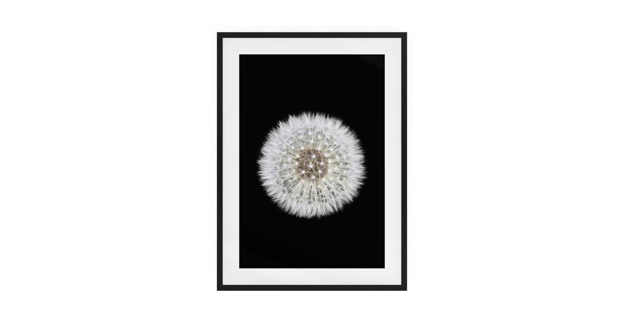 The Dandelion Print Black Wood Frame Medium One