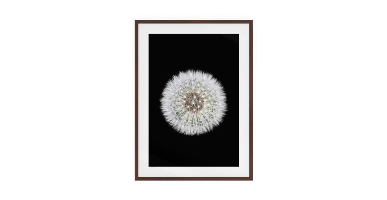 The Dandelion Print Dark Brown Wood Frame Medium One