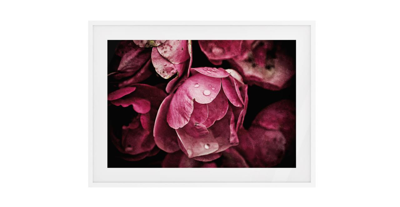 The Dew Drop Print White Wood Frame Small