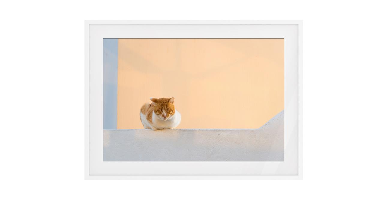 The Feline Print White Wood Frame Small