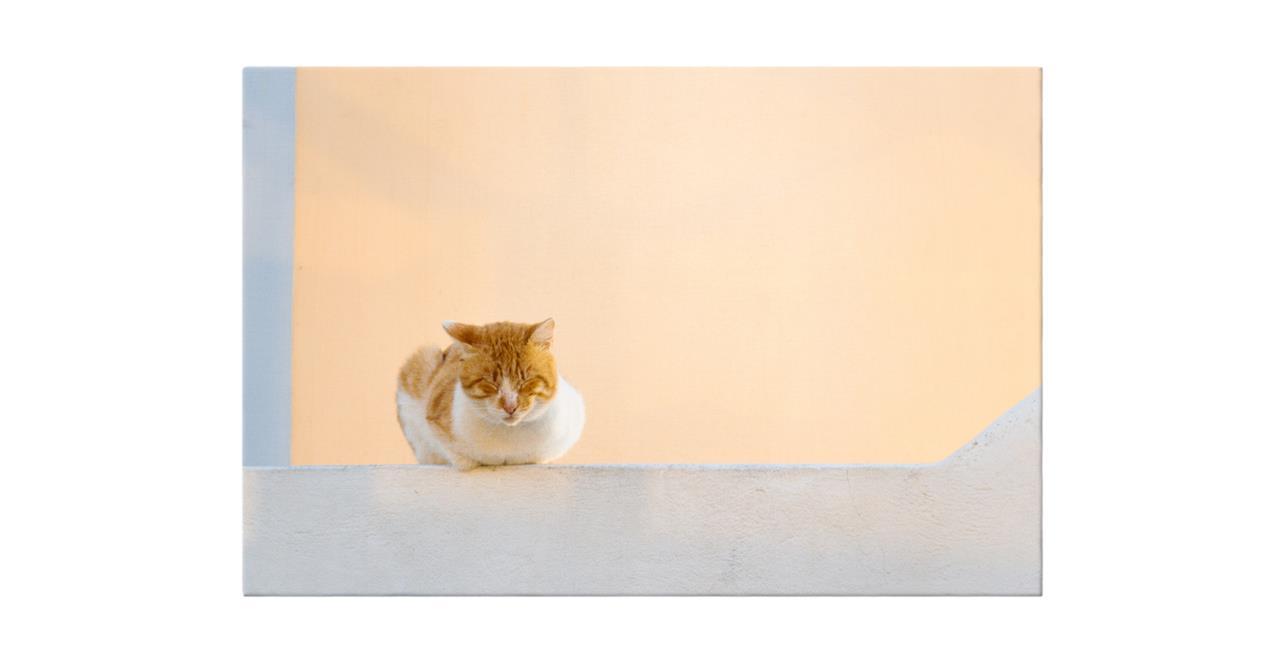 The Feline Print Canvas Small