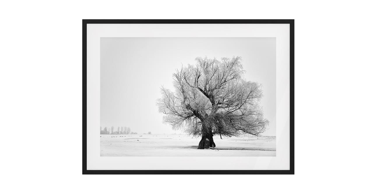 The Frost Print Black Wood Frame Medium