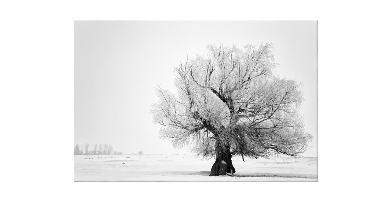 The Frost Print Canvas Medium