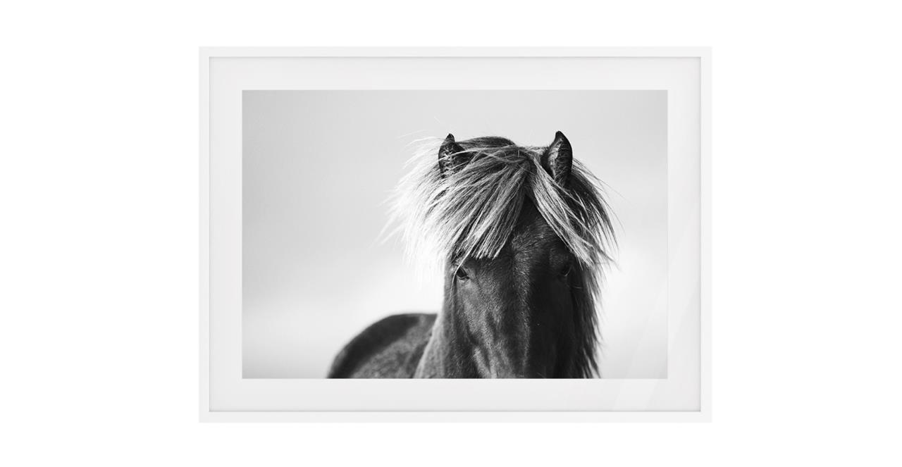 The Gallop Print White Wood Frame Medium