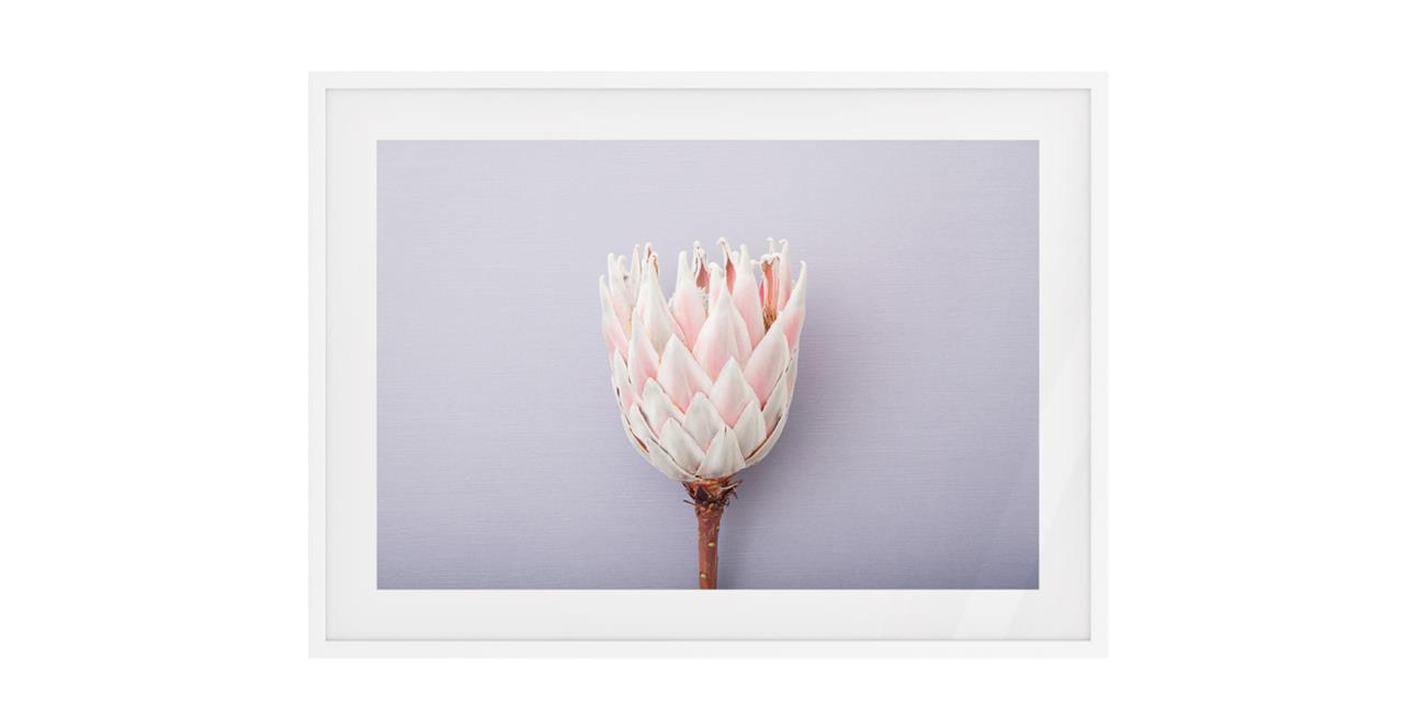 The Protea Print White Wood Frame Medium
