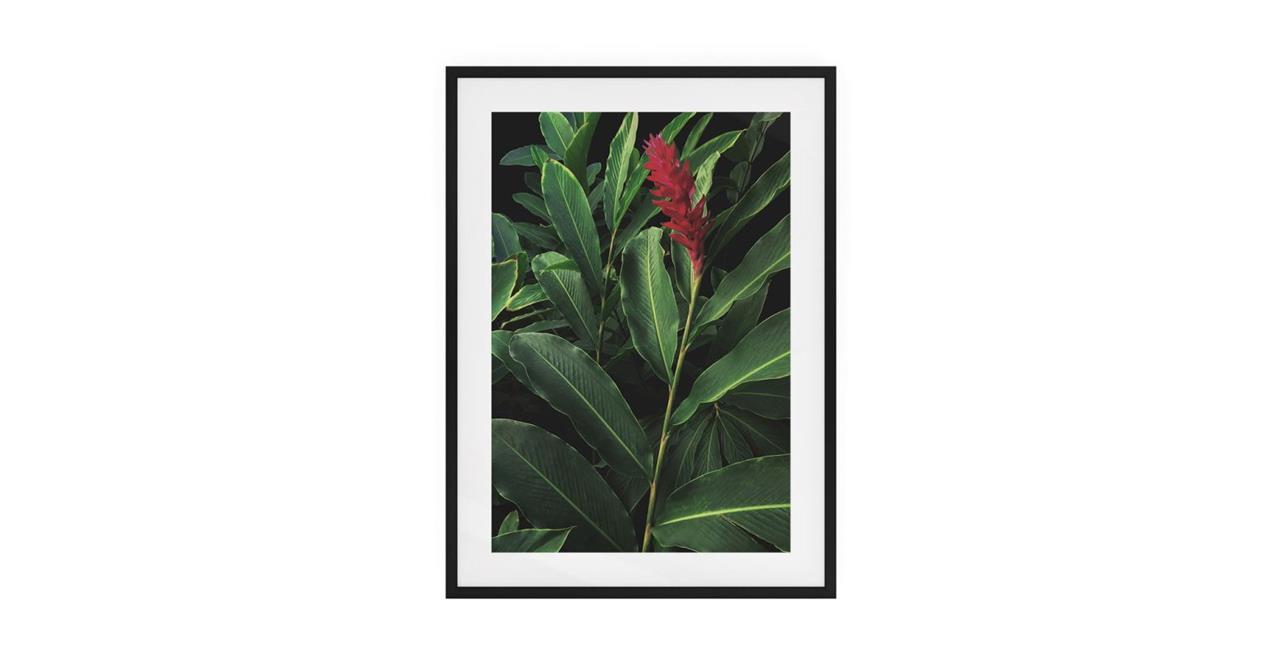 The Red Ginger Print Black Wood Frame Medium