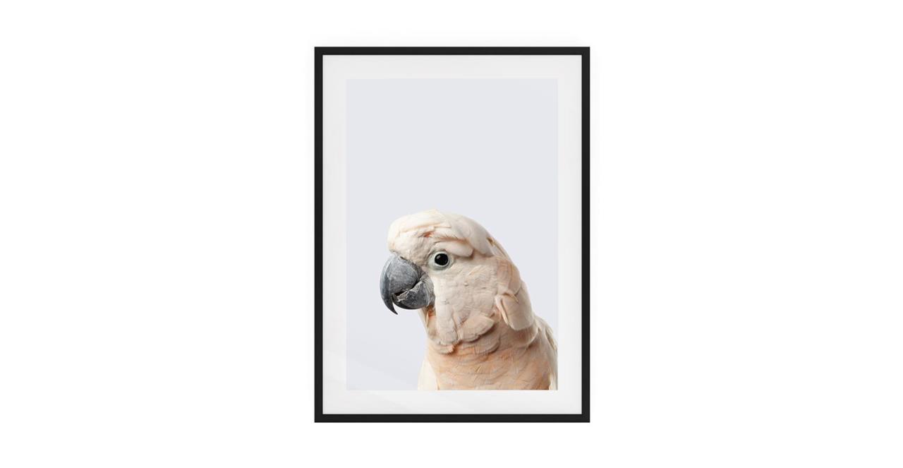 The Moluccan Cockatoo Print Black Wood Frame Small