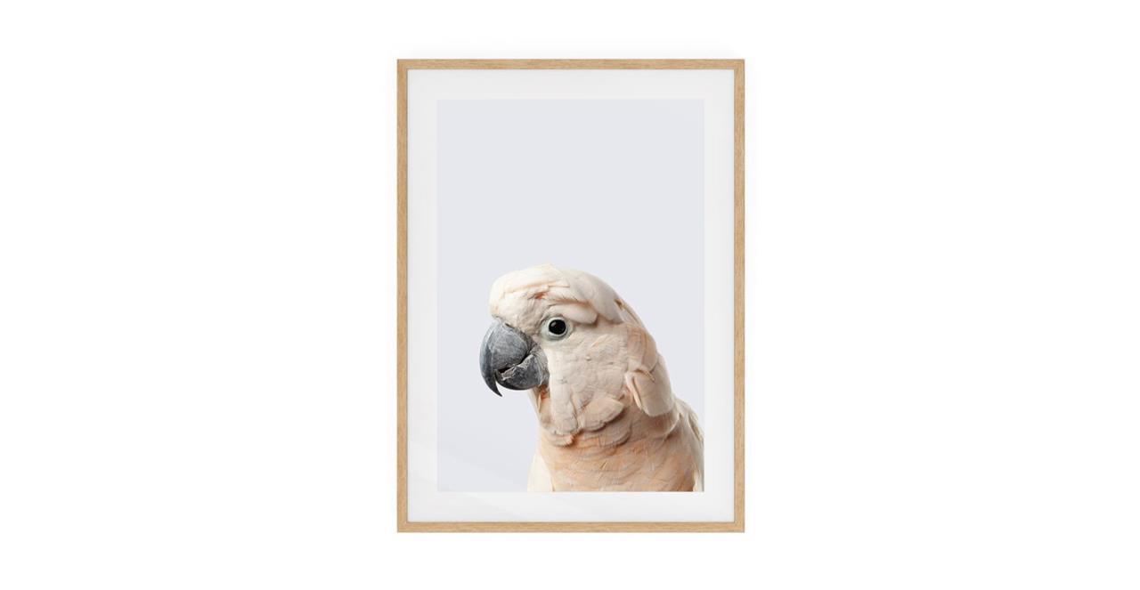 The Moluccan Cockatoo Print Natural Wood Frame Small