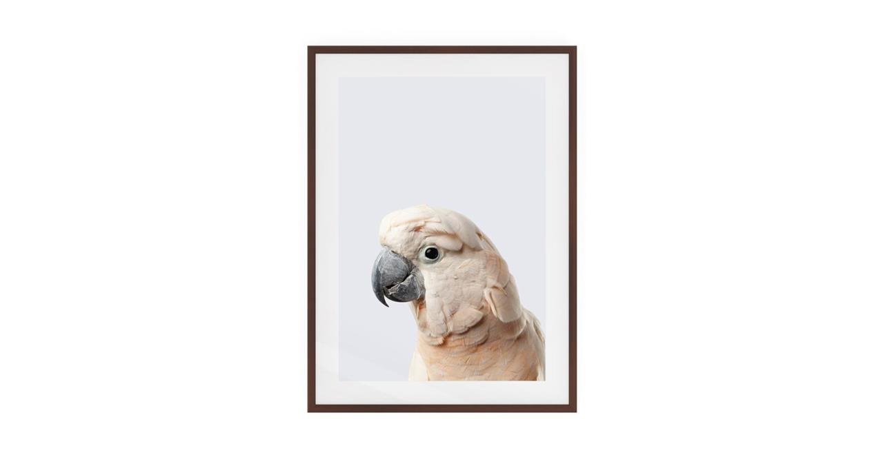 The Moluccan Cockatoo Print Dark Brown Wood Frame Small