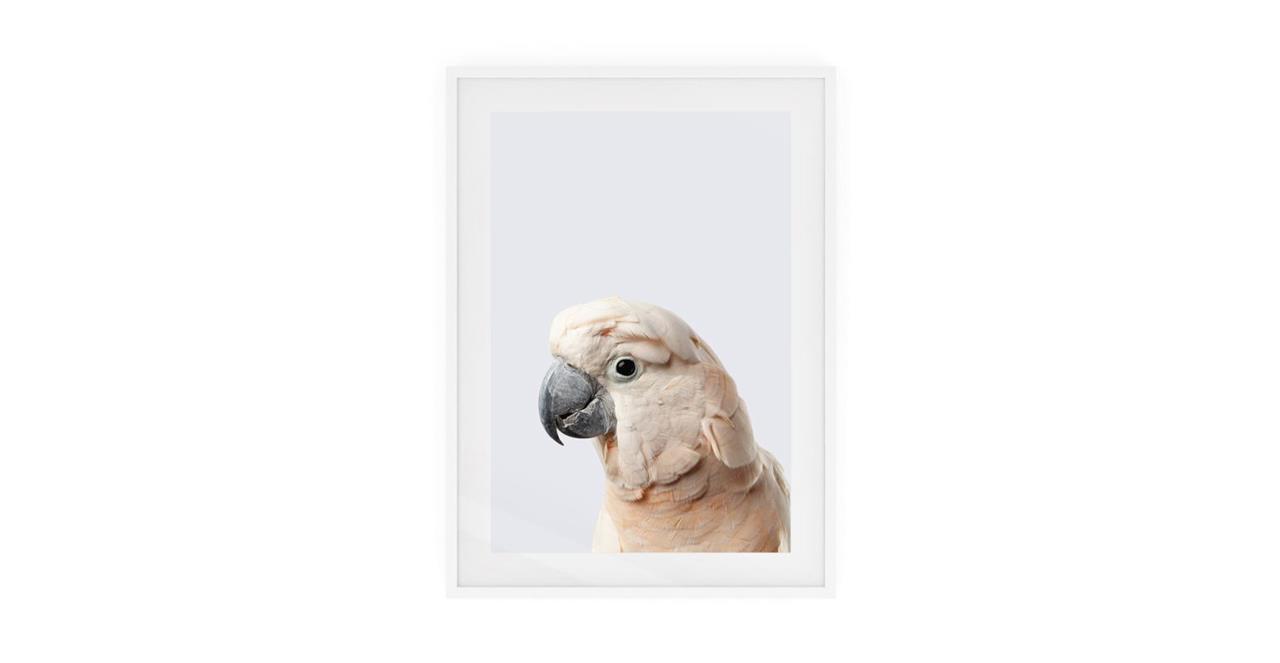 The Moluccan Cockatoo Print White Wood Frame Medium