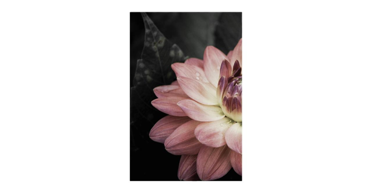 The Water Lily Print Canvas Small