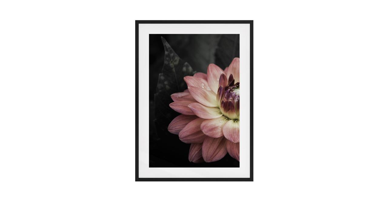 The Water Lily Print Black Wood Frame Medium