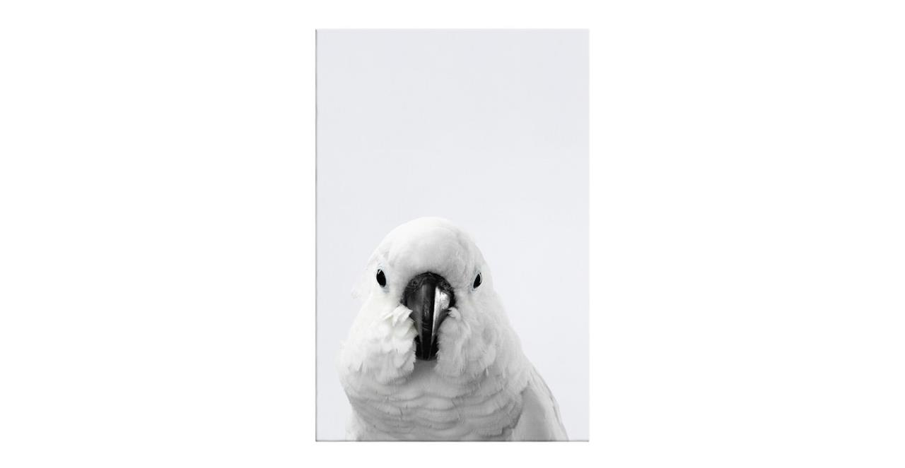 The Yellow Crested Cockatoo Print Canvas Small