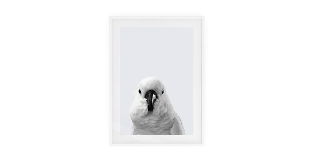 The Yellow Crested Cockatoo Print White Wood Frame Medium
