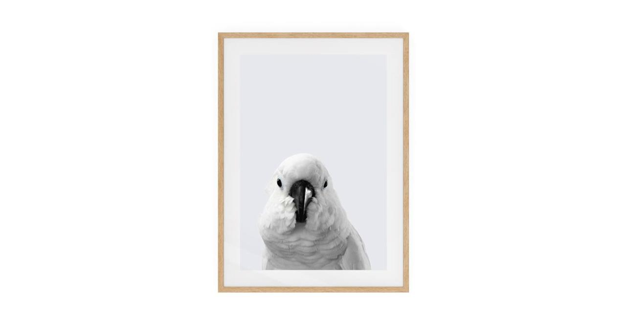 The Yellow Crested Cockatoo Print Natural Wood Frame Medium